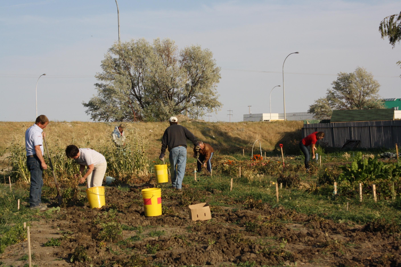 So You Want To Start A Community Garden Gfsa News