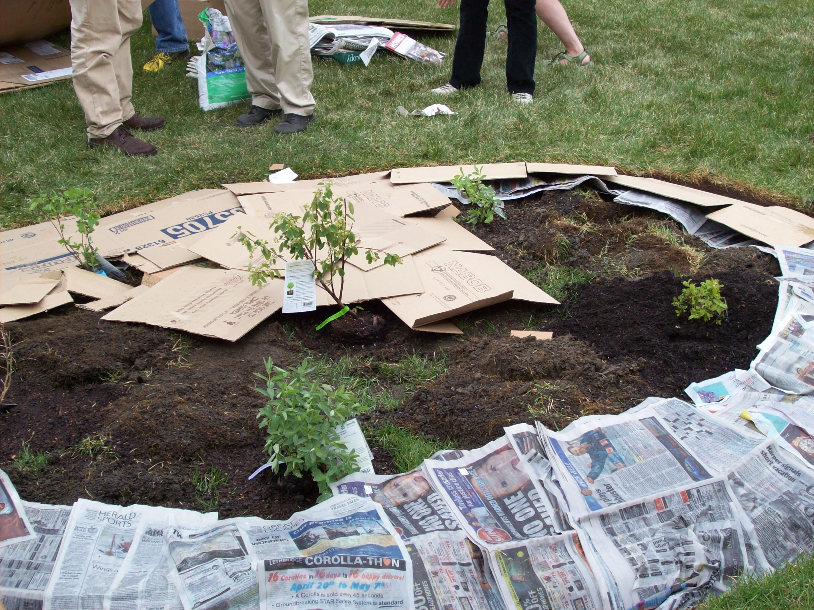 How To Lay Out A Garden Bed